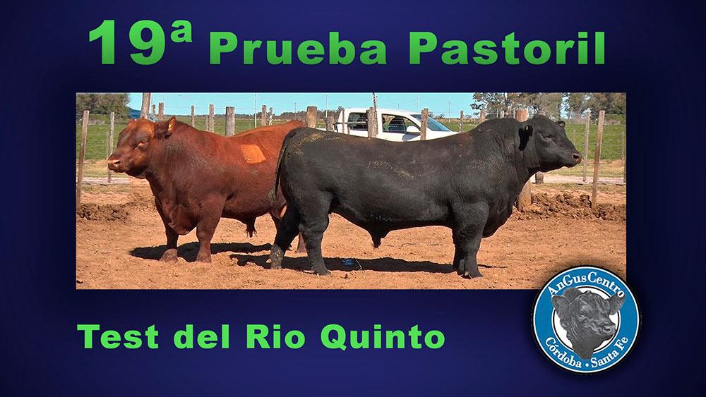 19ª PRUEBA PASTORIL RIO QUINTO