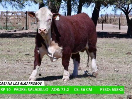 ORDEN 7 RP10 - CABAÑA LOS ALGARROBOS