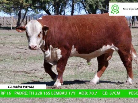 ORDEN 12 RP16 PP - CABAÑA PAYMA