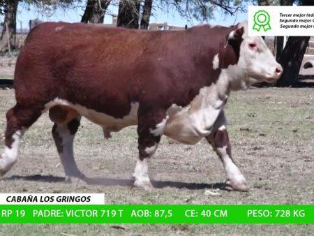 ORDEN 14 RP19 - CABAÑA LOS GRINGOS