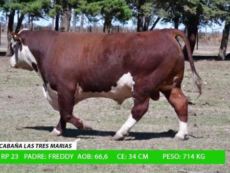 ORDEN 17 RP23 - CABAÑA LAS TRES MARIAS