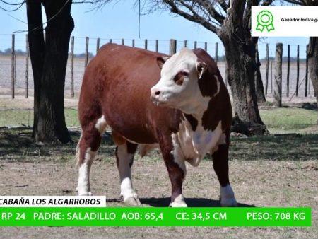 ORDEN 18 RP24 - CABAÑA LOS ALGARROBOS
