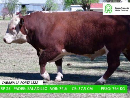 ORDEN 19 RP25 - CABAÑA LA FORTALEZA