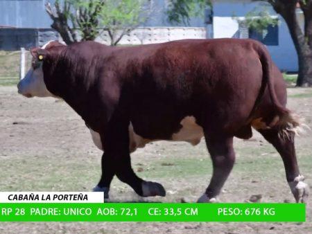 ORDEN 20 RP28 - CABAÑA LA PORTEÑA