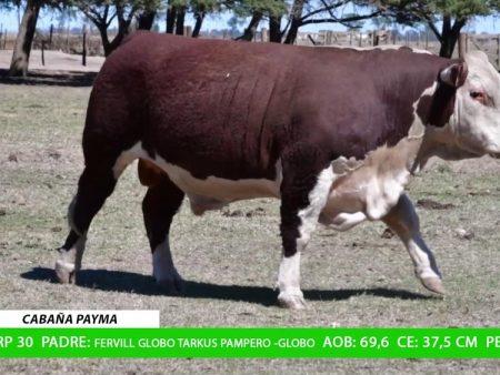 ORDEN 22 RP30 - CABAÑA PAYMA