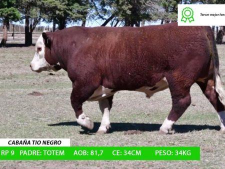 ORDEN 6 RP9 - CABAÑA TIO NEGRO